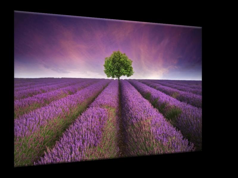Glasschilderij Lavendel, Landelijk | Paars, Blauw, Groen | 100x70cm 1Luik