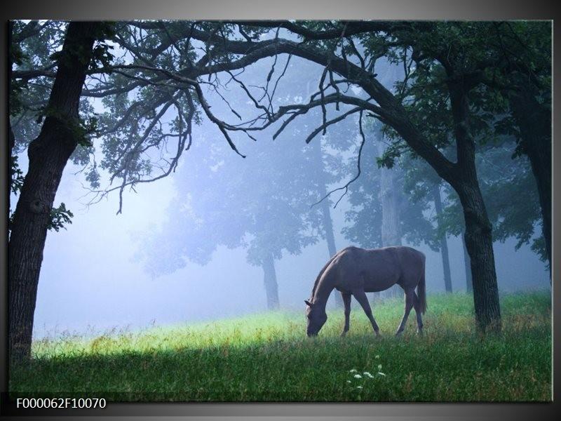 Glas schilderij Paard   Grijs, Groen, Zwart