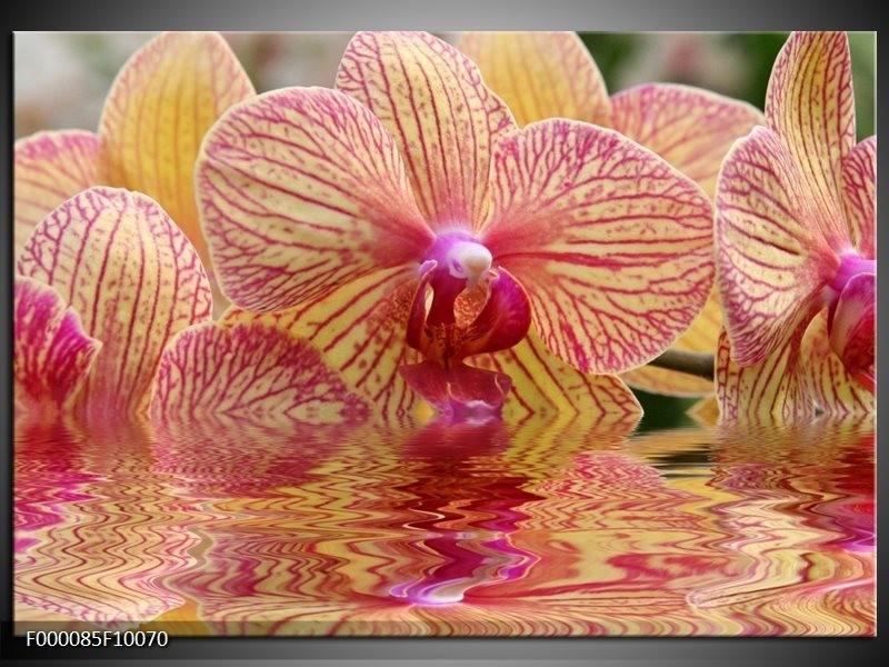 Glas schilderij Orchidee | Geel, Rood, Wit
