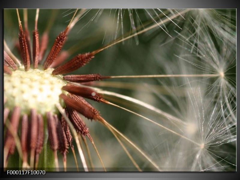 Glas schilderij Natuur | Bruin, Wit, Groen