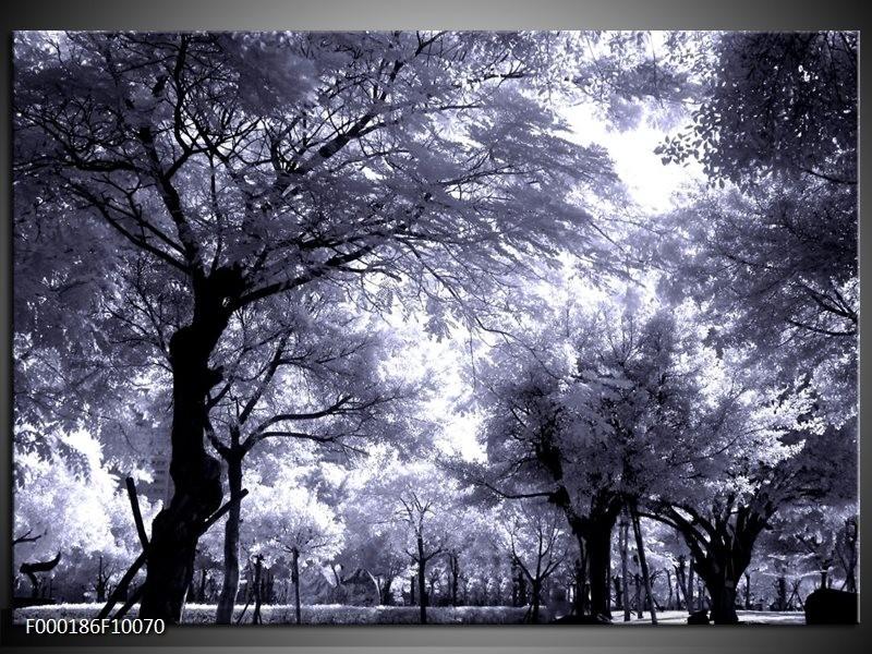Glas schilderij Bomen | Grijs, Wit, Zwart