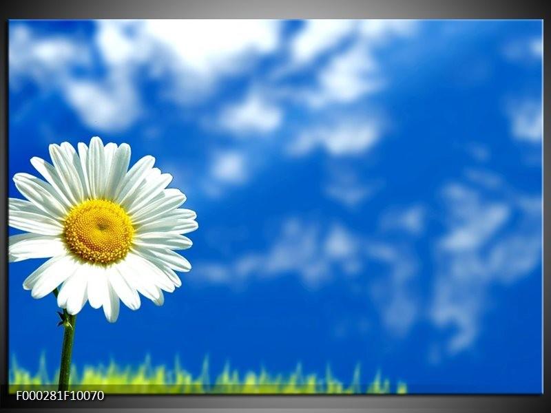 Glas schilderij Bloem | Blauw, Wit, Geel
