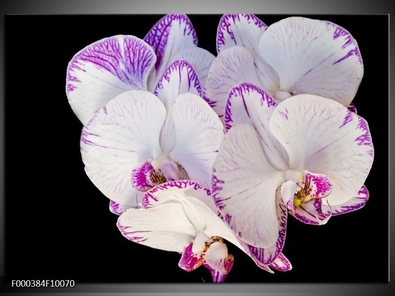 Glas schilderij Orchidee | Paars, Zwart, Wit