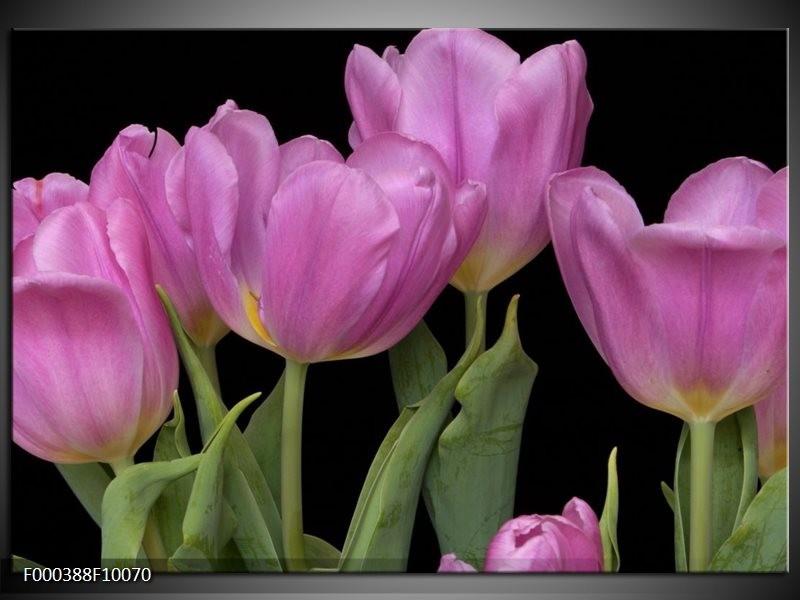 Glas schilderij Tulpen   Paars, Groen, Zwart