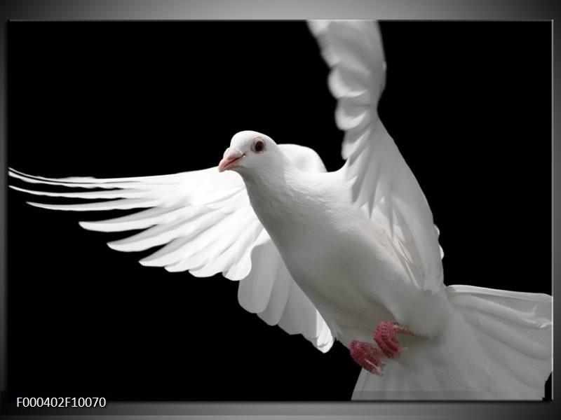 Glas schilderij Vogel | Wit, Zwart, Grijs