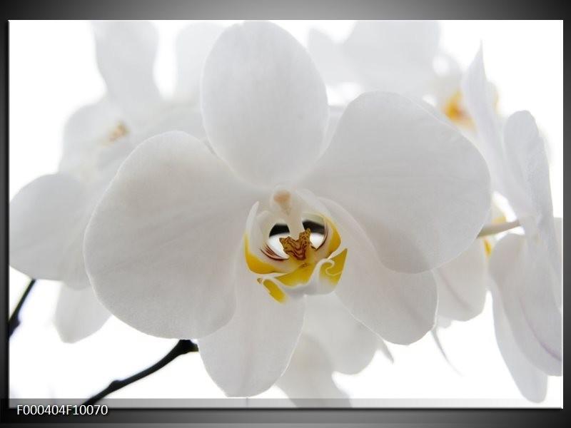 Glas schilderij Orchidee | Wit, Geel,, Zwart