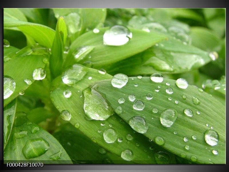 Glas schilderij Druppels   Groen, Wit, Grijs