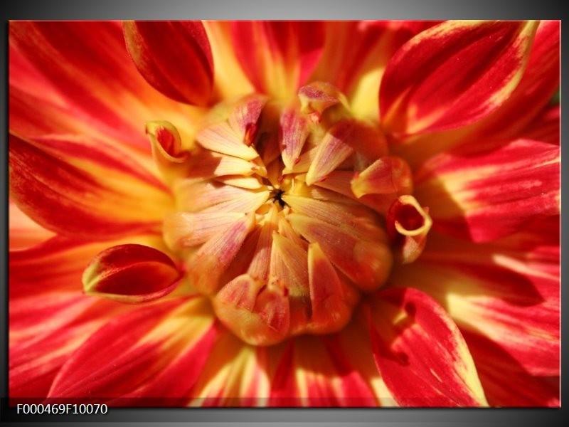 Glas schilderij Bloem   Rood, Geel