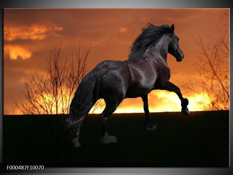 Glas schilderij Paard   Zwart, Geel, Bruin