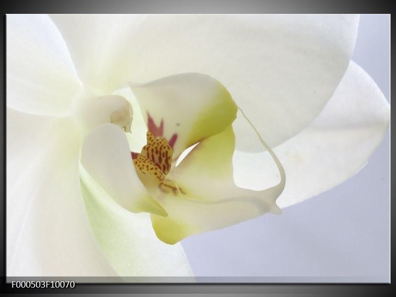 Glas schilderij Orchidee | Wit, Geel, Groen