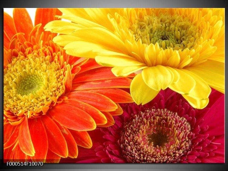 Glas schilderij Bloem | Geel, Oranje, Rood