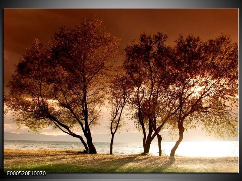 Glas schilderij Bomen   Bruin, Wit, Zwart