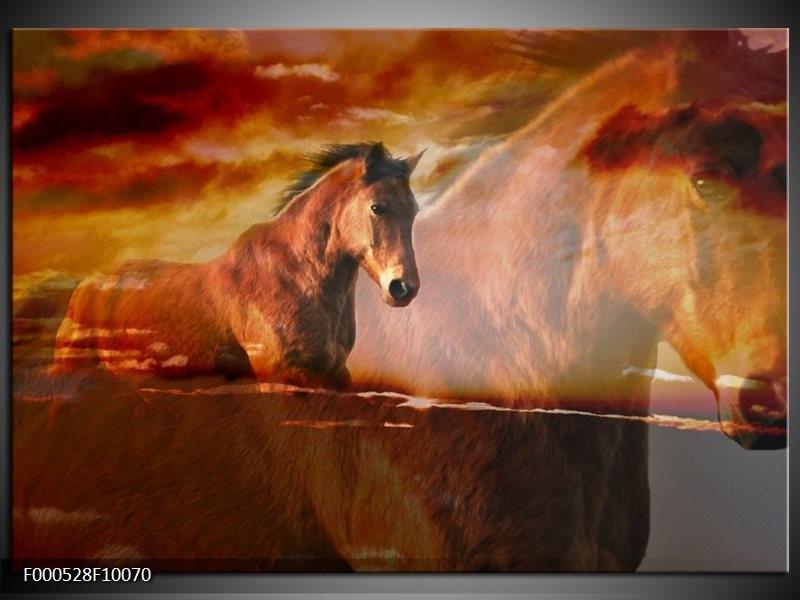Glas schilderij Paard   Bruin, Geel, Zwart