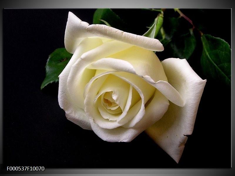 Glas schilderij Roos | Wit, Zwart, Groen