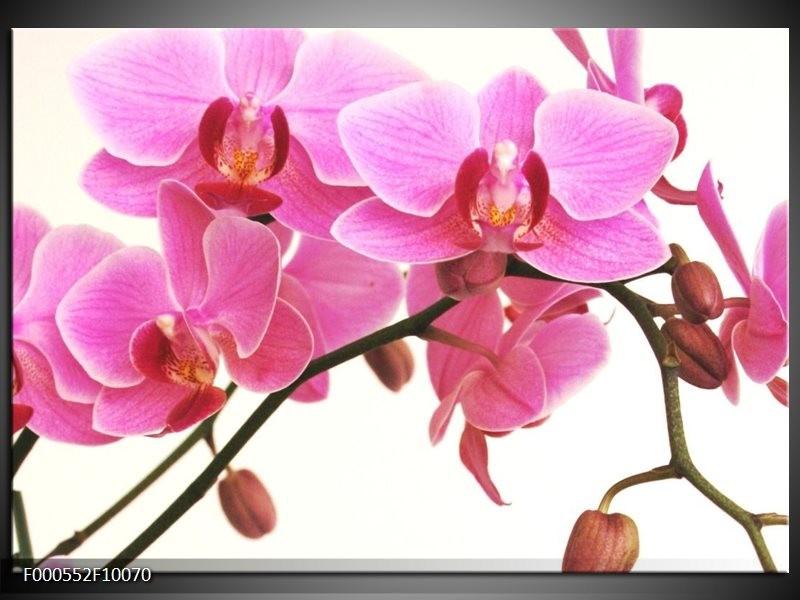 Glas schilderij Orchidee   Rood, Wit, Zwart