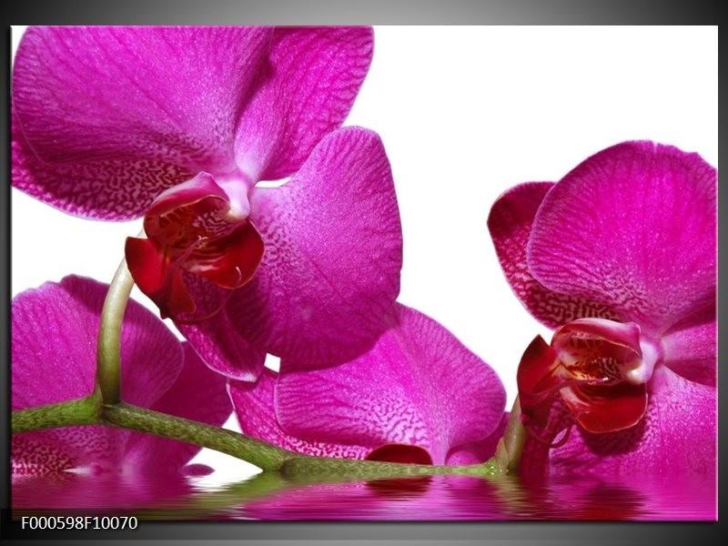 Glas schilderij Orchidee | Paars, Wit, Groen
