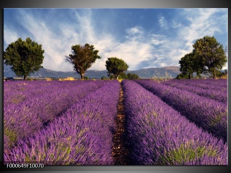 Glas schilderij Lavendel | Paars, Blauw, Wit