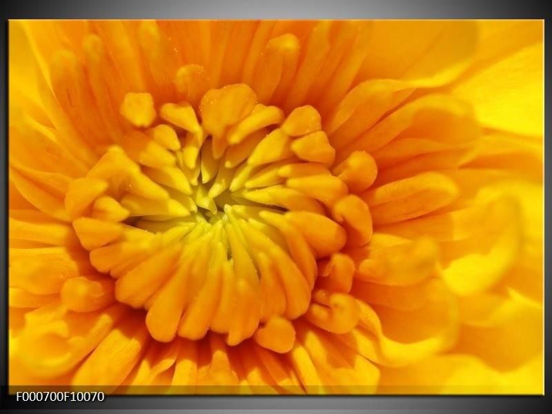 Glas schilderij Bloem | Oranje, Wit, Geel
