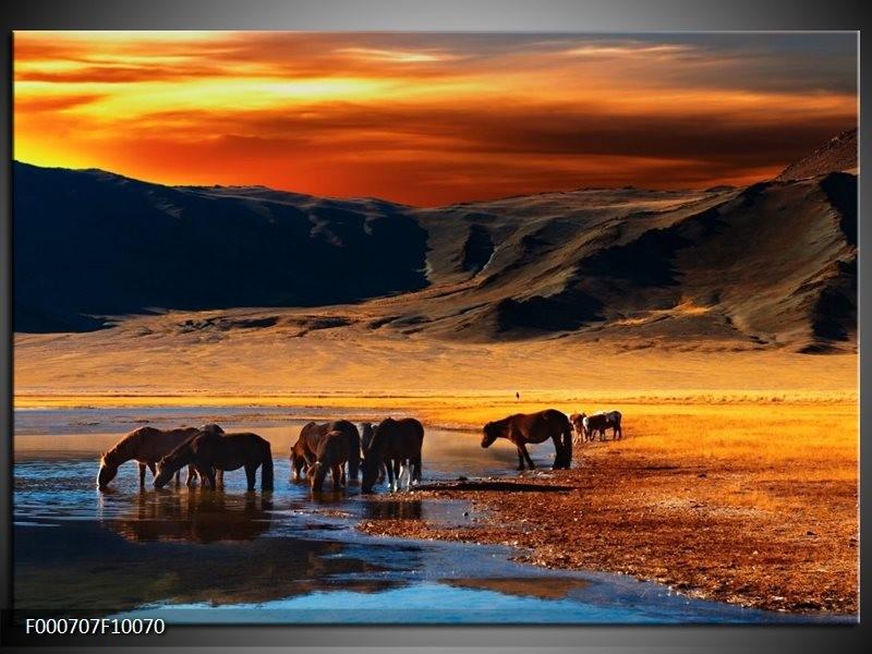 Glas schilderij Paarden | Oranje, Rood, Blauw