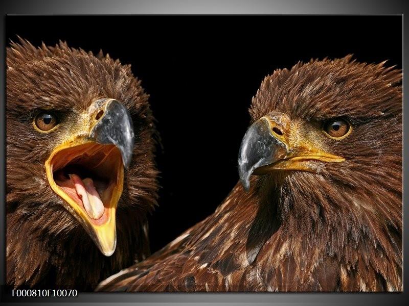 Glas schilderij Vogels | Geel, Bruin, Zwart