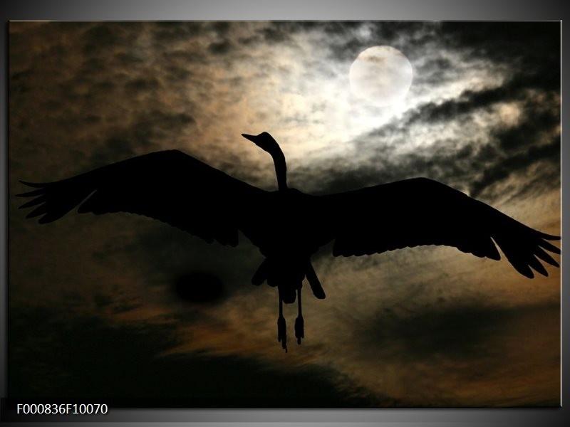 Glas schilderij Vogel | Zwart, Wit, Bruin