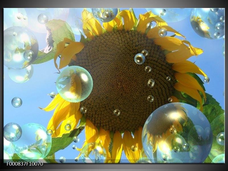 Glas schilderij Zonnebloem | Geel, Bruin, Blauw