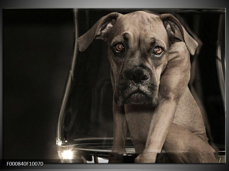 Glas schilderij Hond | Grijs, Zwart, Wit