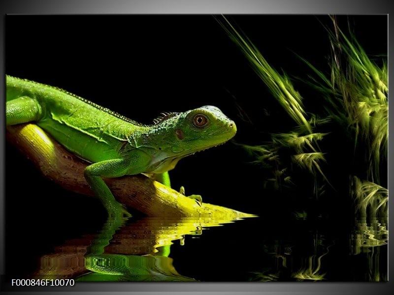 Glas schilderij Leguaan | Groen, Zwart, Geel