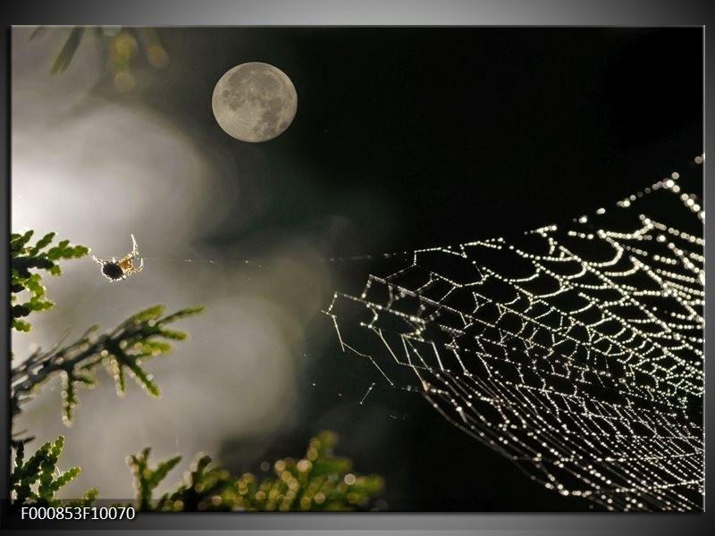 Glas schilderij Maan | Wit, Grijs, Zwart