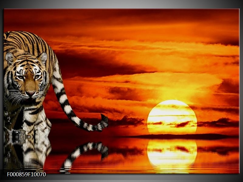 Glas schilderij Tijger | Bruin, Oranje, Rood
