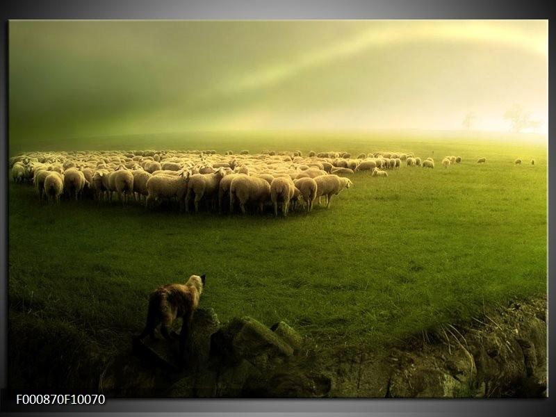 Glas schilderij Schaap | Groen, Geel, Wit