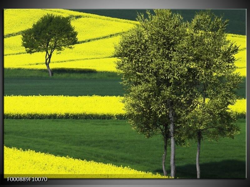 Glas schilderij Boom | Groen, Geel, Wit