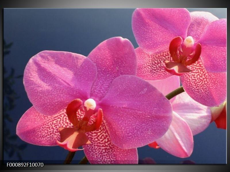 Glas schilderij Orchidee | Paars, Wit, Rood