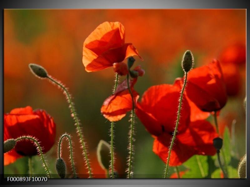 Glas schilderij Klaproos   Rood, Groen