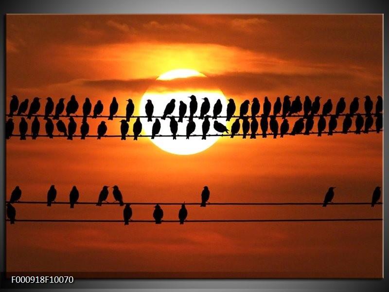 Glas schilderij Vogels | Zwart, Geel, Oranje