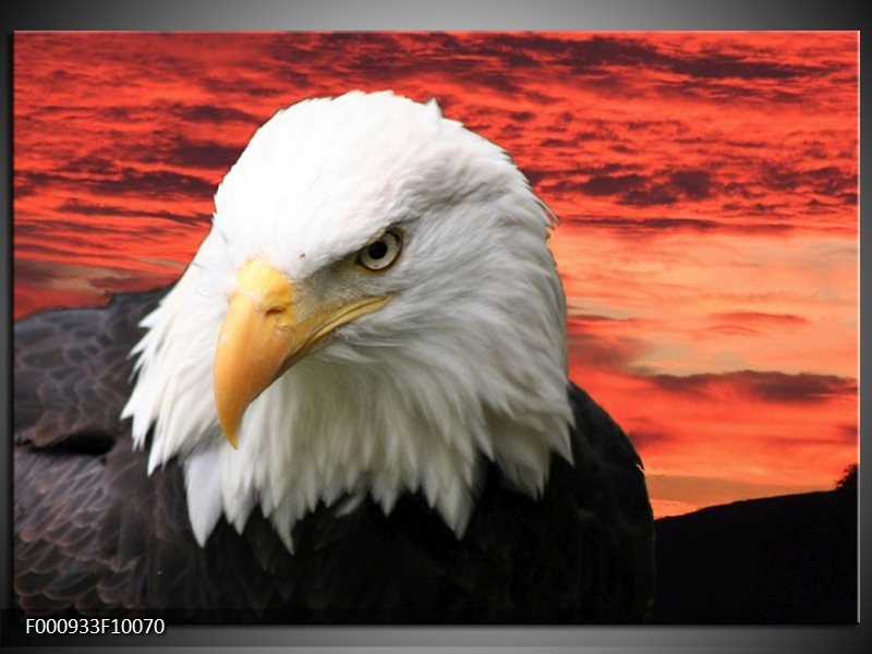 Glas schilderij Vogel | Wit, Rood, Zwart