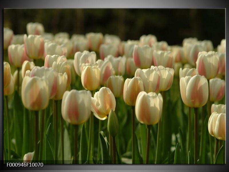Glas schilderij Tulp | Geel, Wit, Groen