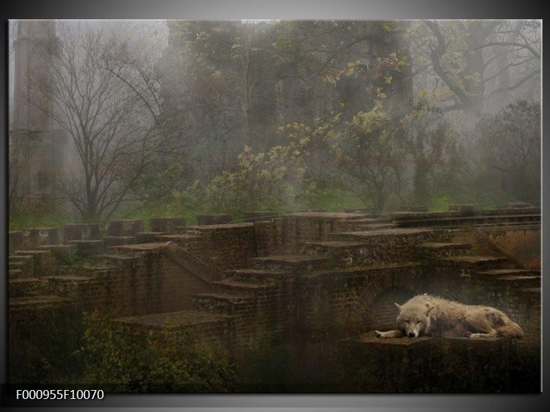 Glas schilderij Wolf | Groen, Grijs