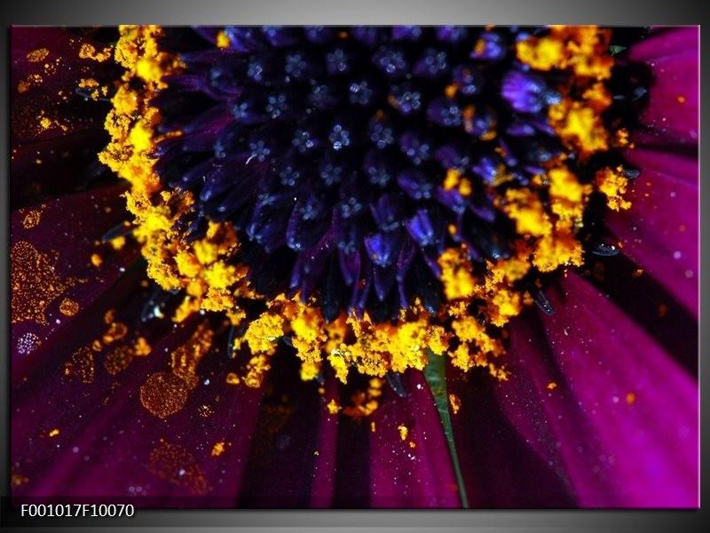 Glas schilderij Bloem   Paars, Geel, Blauw