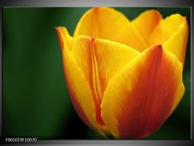 Glas schilderij Tulp | Geel, Groen, Oranje