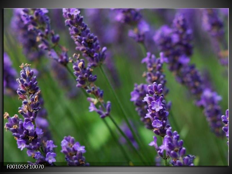Glas schilderij Lavendel | Blauw, Zwart, Groen