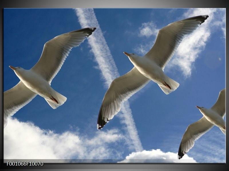Glas schilderij Vogels | Blauw, Zwart