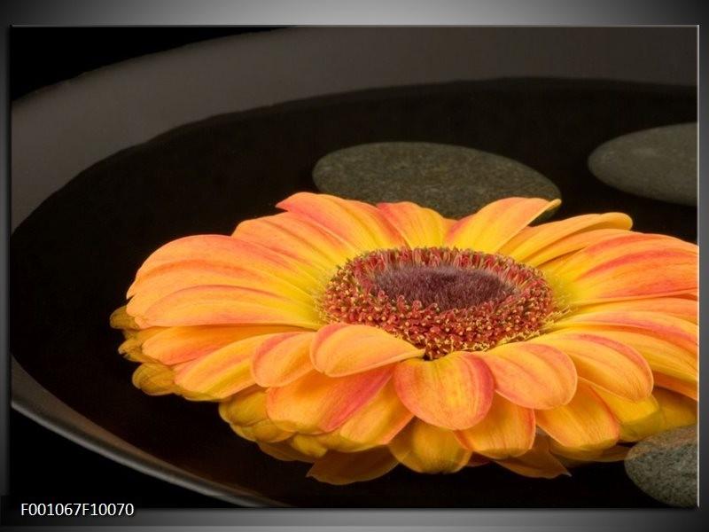 Glas schilderij Bloem   Zwart, Oranje, Geel