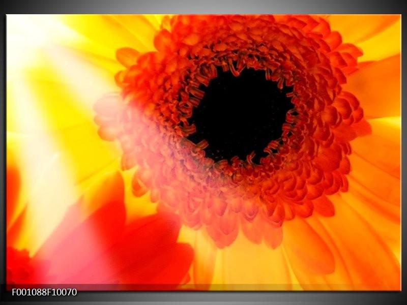 Glas schilderij Bloem | Geel, Zwart, Rood