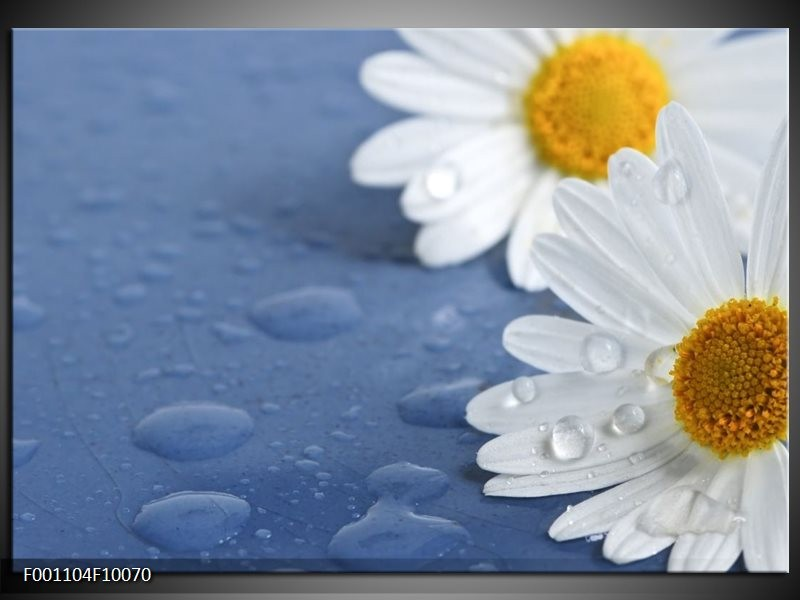 Glas schilderij Bloem | Wit, Blauw, Geel
