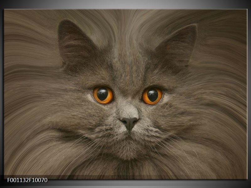 Glas schilderij Kat | Grijs, Bruin, Wit