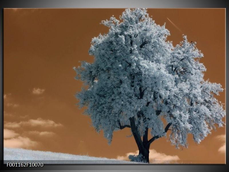Glas schilderij Boom | Wit, Bruin, Zwart