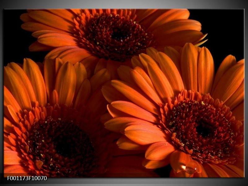 Glas schilderij Bloem | Oranje, Zwart, Rood