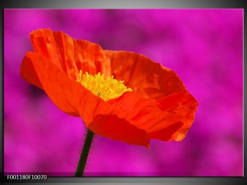 Glas schilderij Klaproos | Rood, Geel, Paars