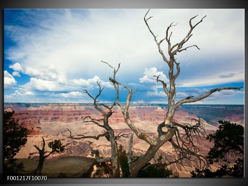 Glas schilderij Natuur | Blauw, Wit